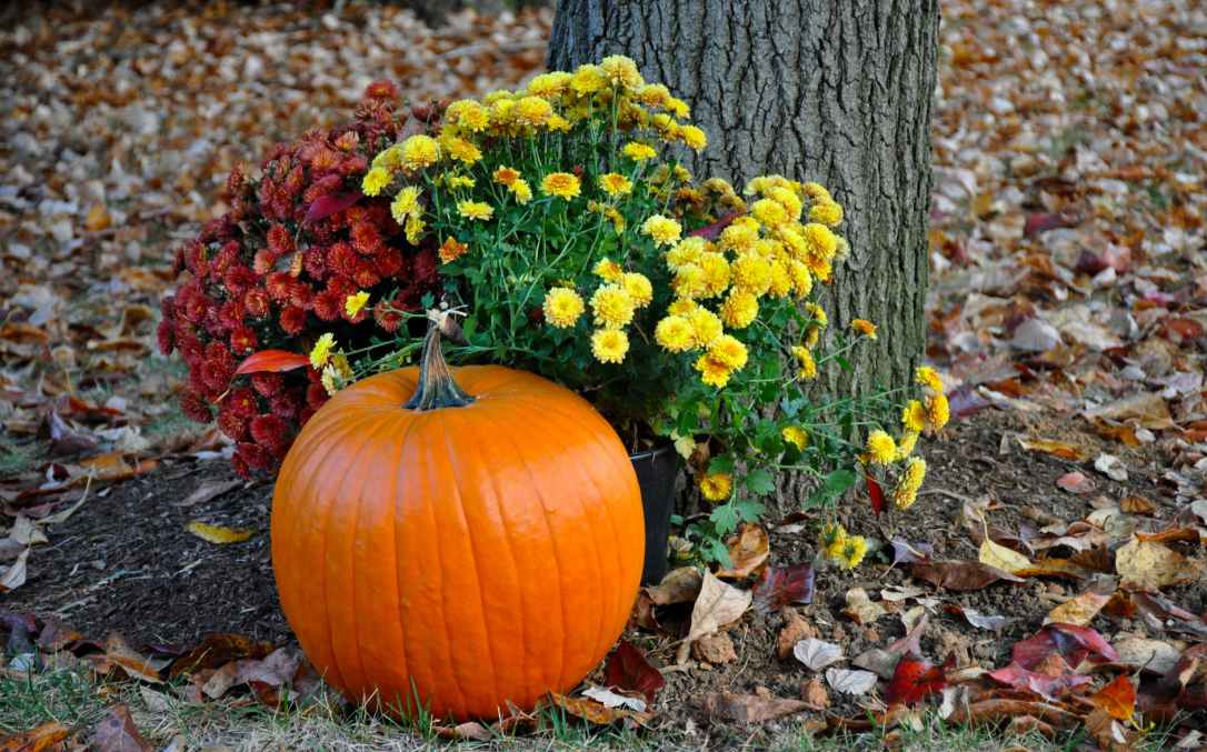 pumpkin near tree